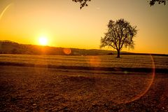 Sunset in autumn with tree Royalty Free Stock Image