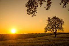 Sunset in autumn with tree. In Germany Stock Images