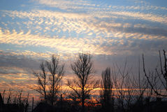 Sunset. Autumn sunset. Trees without a foliage Royalty Free Stock Image