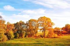 Sunset autumn view of autumn park lit by sinlight. Autumn nature landscape-yellowed autumn park in autumn sunlight Royalty Free Stock Image