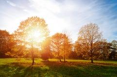 Sunset autumn view of autumn park lit by sinlight. Autumn nature landscape-yellowed autumn park in autumn sunny weather. Royalty Free Stock Photo
