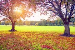 Sunset in autumn Stock Photos
