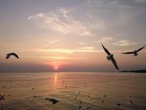 Sunset. Background bird travel bang-poo Thailand landscape royalty free stock image