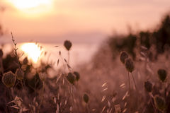 Sunset background over summer meadow. Stock Photography