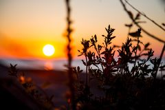 Sunset on the background of the sea and grass in the foreground royalty free stock photo