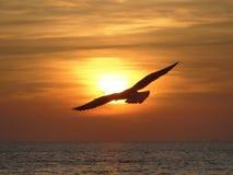 Sunset. Background seagull sun sky bird royalty free stock image
