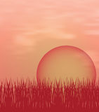 Sunset background with sun and grass Royalty Free Stock Photos