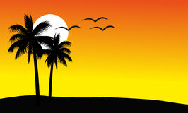 Sunset Background. Vector illustration of the sunset background with  coconut palm trees and owls on orange background Royalty Free Stock Photos
