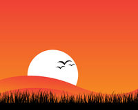 Sunset Background. Vector illustration of sunset and silhouette of grass with birds on orange and red background Stock Images