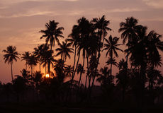 Sunset at backwaters of Kerala. Silhouettes of coco-trees and sunset at backwaters of Kerala, India Stock Photos