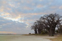 Sunset at Baines Baobab Stock Images
