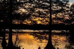 Sunset Through Bald Cypress Trees in Virginia Beach, Virginia. Sunset through Bald Cypress trees at Stumpy Lake in Virginia Beach, Virginia Stock Photo