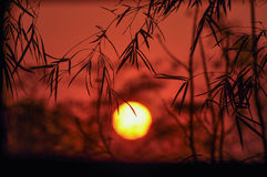 Sunset with bamboo leaf Stock Photo