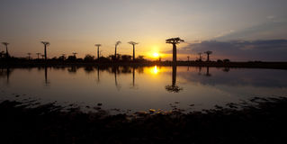 Sunset with baobabs Stock Photo