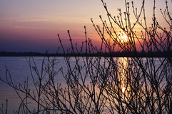 Sunset Bare Branches Stock Image