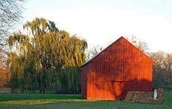 Sunset Barn. A large weeping willow tree, red barn, and catholic shrine with statue of virgin mary bathed in the yellow light of sunset Royalty Free Stock Images