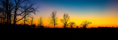 Sunset Through the Barren Trees royalty free stock photo