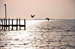 Sunset at the bay. Beautiful sunset at the bay Royalty Free Stock Photo