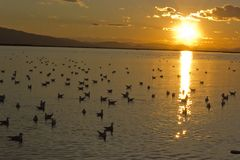 Sunset in bay with water birds. Photo of sunset in bay with water birds swimming on water Royalty Free Stock Photos