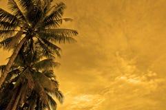 Sunset beach Stock Photography