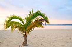The sunset beach Stock Photography