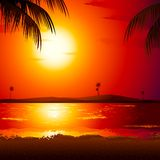 Sunset in Beach. Illustration of sunset view in beach with palm tree Stock Photography