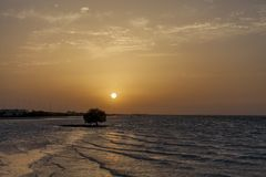 Sunset in the beach in Abu Dhabi. Glittering water reflecting the sun, mangrove silhouette in the water Stock Photography