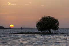 Sunset in the beach in Abu Dhabi. Glittering water reflecting the sun, mangrove silhouette in the water Stock Photo