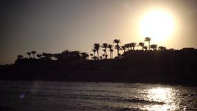 Sunset on the beach around the ocean and palm trees. The wind shakes the leaves of trees stock video