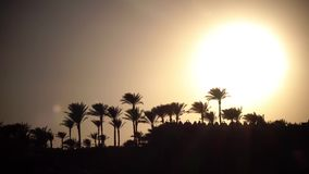 Sunset on the beach around the ocean and palm trees. The wind shakes the leaves of trees stock footage