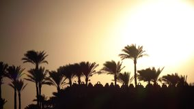Sunset on the beach around the ocean and palm trees. The wind shakes the leaves of trees stock video footage
