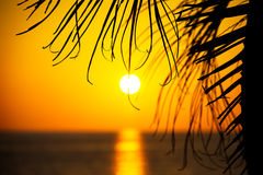 Sunset on the beach. Backlit sunlight illuminates the palm branches Royalty Free Stock Photo
