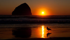 Sunset on the beach with bird Stock Photography