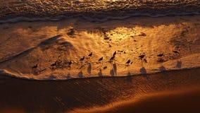 Sunset on the beach with birds Stock Photos