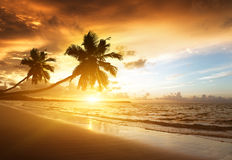 Sunset on the beach. Of caribbean sea Stock Images