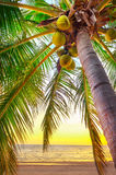 Sunset on the beach of caribbean sea Stock Images