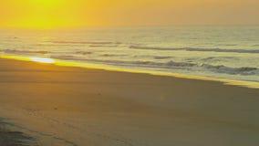 Sunset on beach with coastal birds. Video of sunset on beach with coastal birds stock video