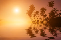 Sunset on the beach with coconut palms. Royalty Free Stock Photo