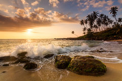 Sunset on the beach with coconut palms. Stock Photography