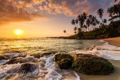 Sunset on the beach with coconut palms. Stock Photos