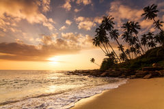 Sunset on the beach with coconut palms. Stock Images
