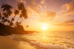 Sunset on the beach with coconut palms. Stock Image