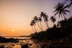 Sunset on the beach with coconut palms. Royalty Free Stock Photography