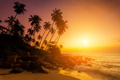 Sunset on the beach with coconut palms. Royalty Free Stock Image