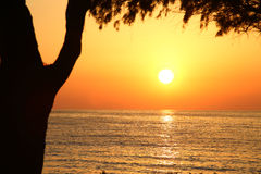 Sunset on the beach with dark tree Stock Image