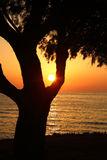 Sunset on the beach with dark tree Royalty Free Stock Image