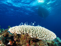Coral reef with scuba diving boat at the backgroun Stock Images