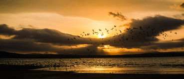 Sunset on the beach with flying birds in Paracas Royalty Free Stock Photography