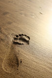 Sunset Beach Footprint. Footprint in the sand in golden evening sunset. Wide angle stock photo