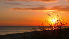 Sunset on the Beach and Grass stock footage